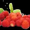 Fruttagel Fragolina di Bosco
