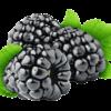 Fruttagel More